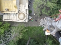 На тези снимки ще видите как арбористите повалят висока, суха дуглазка ела. Дървото се намираше на няколко метра пред входа на църквата свети Кирик и Юлита в Банкя. Елата бе мъртва от няколко години и поради това много опасна. Върхът й се извисяваше на метри над кубетата на храма. Дървото беше отрязано на малки парчета, като всяка една част бе спусната бавно и внимателно до земята с помощта на въже.